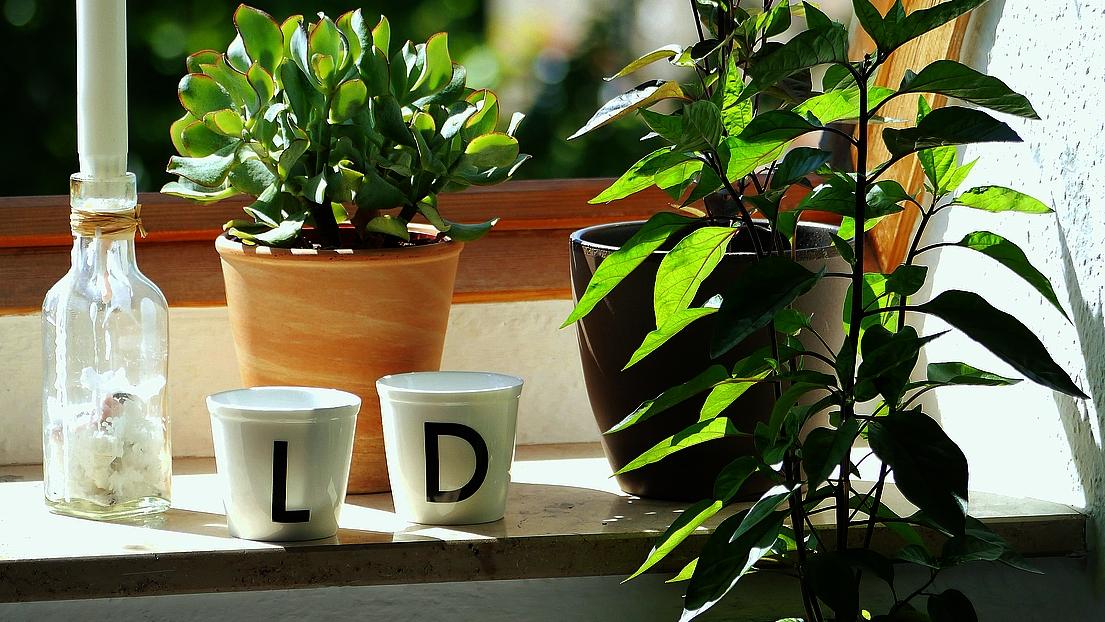 gr ner wohnen 8 pflegeleichte pflanzen f r dein zuhause artikel meereslauschen. Black Bedroom Furniture Sets. Home Design Ideas